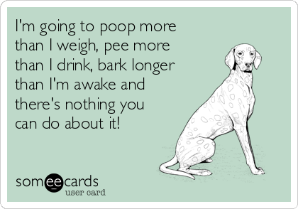 I'm going to poop more than I weigh, pee more than I drink, bark longer than I'm awake and there's nothing you can do about it!