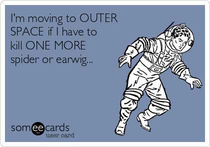 I'm moving to OUTER SPACE if I have to kill ONE MORE spider or earwig...