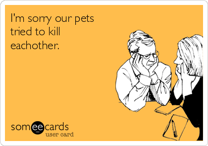 I'm sorry our pets tried to kill eachother.