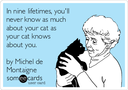 In nine lifetimes, you'll never know as much about your cat as your cat knows about you.  by Michel de Montaigne
