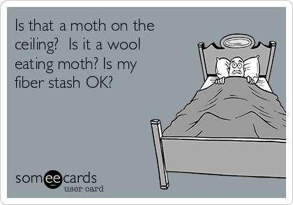 Is that a moth on the ceiling?  Is it a wool eating moth? Is my fiber stash OK?