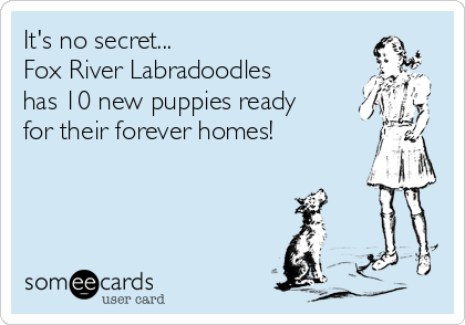 It's no secret... Fox River Labradoodles has 10 new puppies ready for their forever homes!