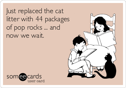 Just replaced the cat litter with 44 packages of pop rocks ... and now we wait.