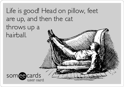 Life is good! Head on pillow, feet are up, and then the cat throws up a hairball.