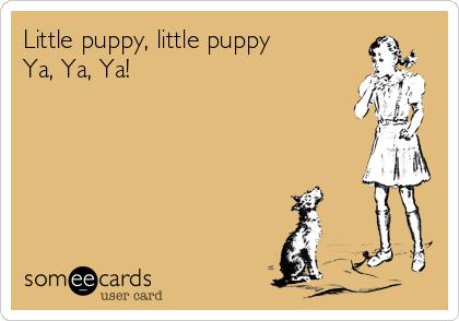 Little puppy, little puppy Ya, Ya, Ya!
