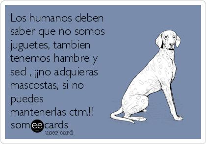 Los humanos deben saber que no somos  juguetes, tambien tenemos hambre y sed , ¡¡no adquieras  mascostas, si no puedes mantenerlas ctm.!!