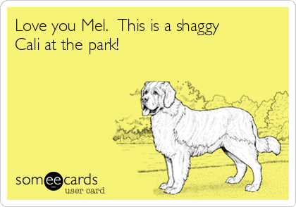 Love you Mel.  This is a shaggy Cali at the park!