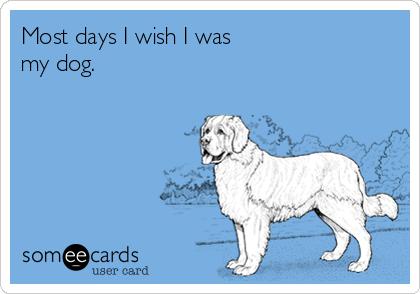 Most days I wish I was my dog.