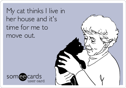 My cat thinks I live in her house and it's time for me to move out.