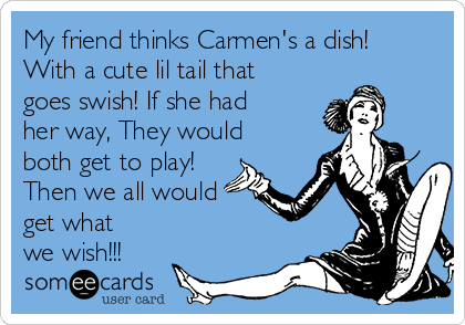 My friend thinks Carmen's a dish! With a cute lil tail that goes swish! If she had her way, They would both get to play! Then we all would get what we wish!!!