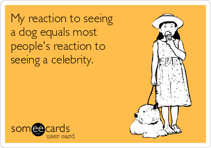 My reaction to seeing  a dog equals most people's reaction to seeing a celebrity.