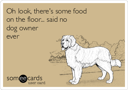 Oh look, there's some food on the floor... said no dog owner ever