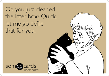 Oh you just cleaned the litter box? Quick, let me go defile that for you.