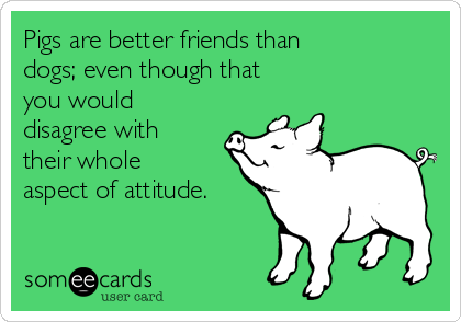Pigs are better friends than  dogs; even though that  you would disagree with  their whole aspect of attitude.