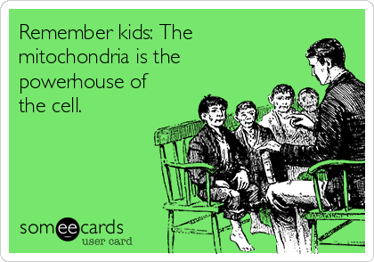 Remember kids: The mitochondria is the powerhouse of the cell.