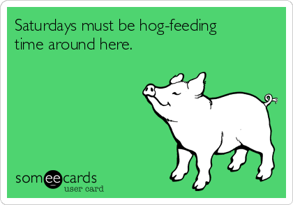 Saturdays must be hog-feeding time around here.
