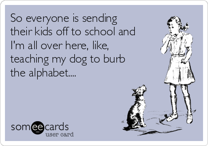 So everyone is sending their kids off to school and I'm all over here, like, teaching my dog to burb the alphabet....