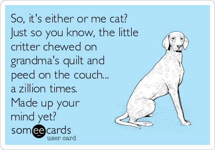 So, it's either or me cat? Just so you know, the little critter chewed on grandma's quilt and peed on the couch... a zillion times. Made up your mind yet?