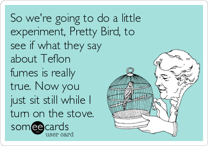 So we're going to do a little experiment, Pretty Bird, to see if what they say about Teflon fumes is really true. Now you just sit still while I turn on the stove.
