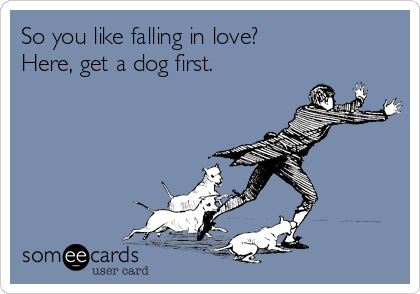 So you like falling in love? Here, get a dog first.