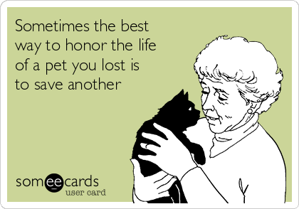 Sometimes the best way to honor the life of a pet you lost is to save another