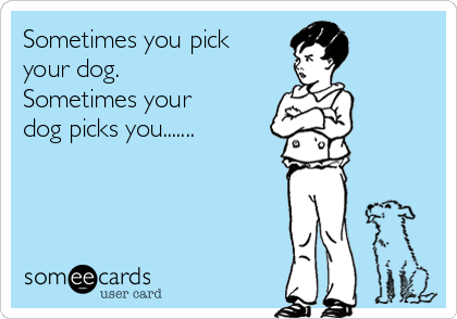 Sometimes you pick your dog. Sometimes your dog picks you.......