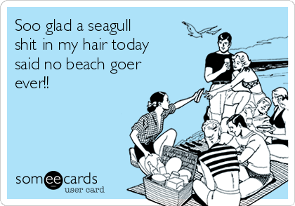 Soo glad a seagull shit in my hair today said no beach goer ever!!