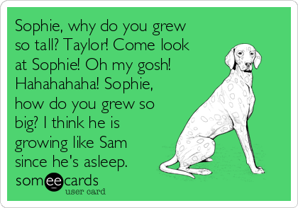 Sophie, why do you grew so tall? Taylor! Come look at Sophie! Oh my gosh! Hahahahaha! Sophie, how do you grew so big? I think he is growing like Sam since he's asleep.