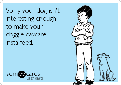 Sorry your dog isn't  interesting enough to make your doggie daycare  insta-feed.