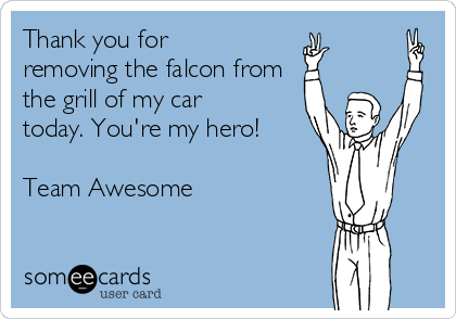 Thank you for removing the falcon from the grill of my car today. You're my hero!  Team Awesome
