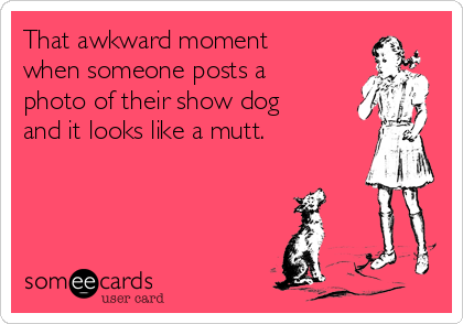 That awkward moment when someone posts a photo of their show dog and it looks like a mutt.