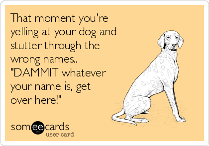 """That moment you're yelling at your dog and stutter through the wrong names.. """"DAMMIT whatever your name is, get over here!"""""""