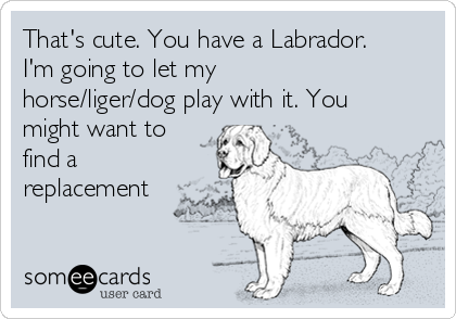 That's cute. You have a Labrador. I'm going to let my horse/liger/dog play with it. You might want to find a replacement