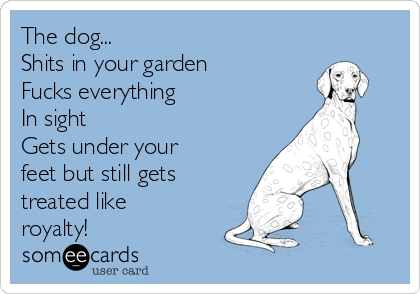 The dog... Shits in your garden Fucks everything In sight Gets under your feet but still gets treated like royalty!