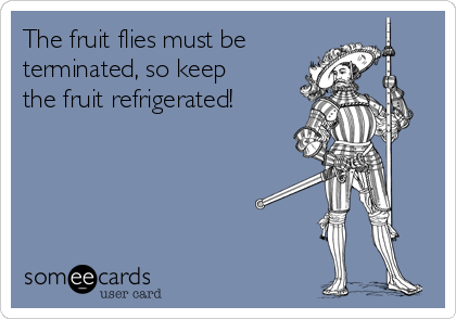 The fruit flies must be terminated, so keep the fruit refrigerated!