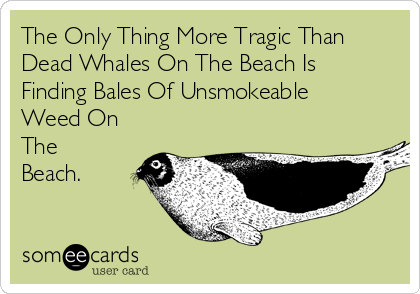 The Only Thing More Tragic Than Dead Whales On The Beach Is Finding Bales Of Unsmokeable Weed On The Beach.