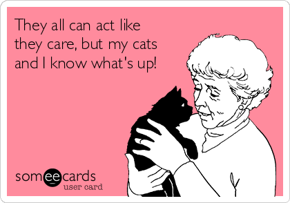 They all can act like they care, but my cats and I know what's up!