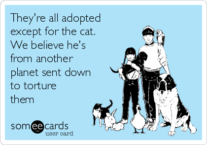 They're all adopted except for the cat. We believe he's from another planet sent down to torture them