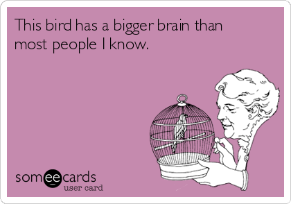 This bird has a bigger brain than most people I know.