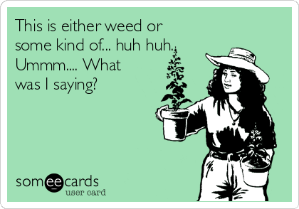 This is either weed or some kind of... huh huh.  Ummm.... What was I saying?