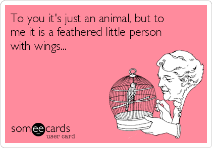 To you it's just an animal, but to me it is a feathered little person with wings...