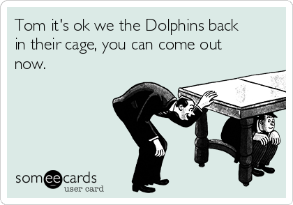 Tom it's ok we the Dolphins back in their cage, you can come out now.