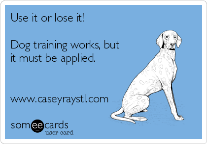 Use it or lose it!  Dog training works, but it must be applied.   www.caseyraystl.com