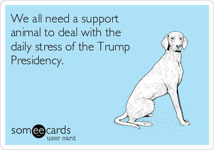 We all need a support animal to deal with the daily stress of the Trump Presidency.