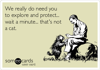 We really do need you to explore and protect... wait a minute... that's not a cat.