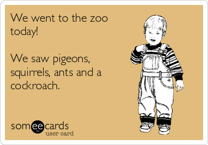 We went to the zoo today!  We saw pigeons, squirrels, ants and a  cockroach.