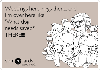 """Weddings here..rings there...and I'm over here like """"What dog needs saved?""""  THERE!!!!"""