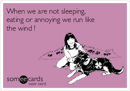 When we are not sleeping, eating or annoying we run like the wind !