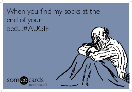 When you find my socks at the end of your bed....#AUGIE