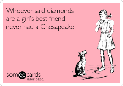 Whoever said diamonds are a girl's best friend never had a Chesapeake
